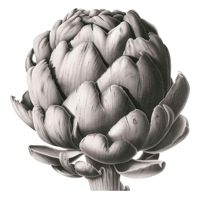 Artichoke Head in Charcoal - Susannah Blaxill.jpeg