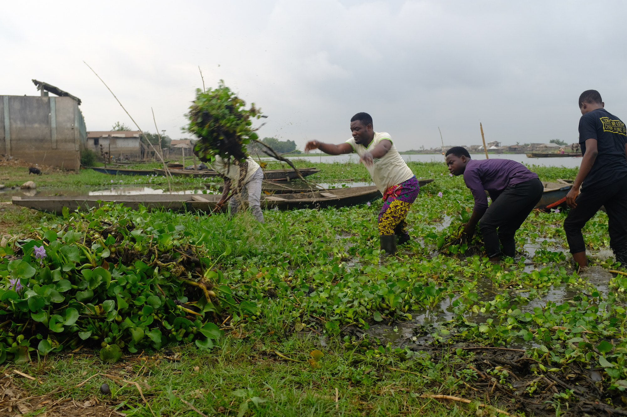 "In Benin, the invasive water hyacinth has also become a ""green gold"" -"