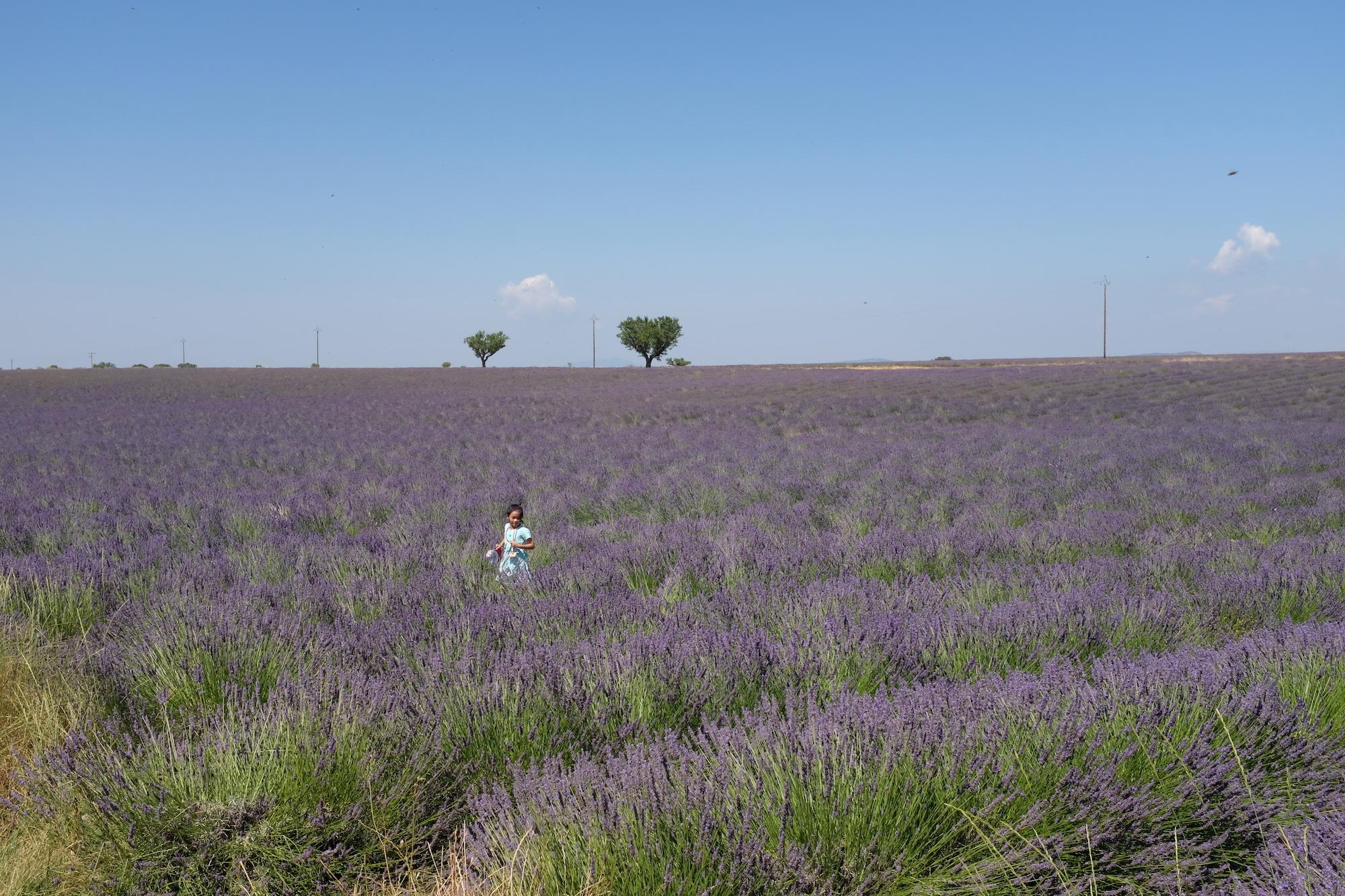 Les touristes convoitent l'or bleu de Provence -