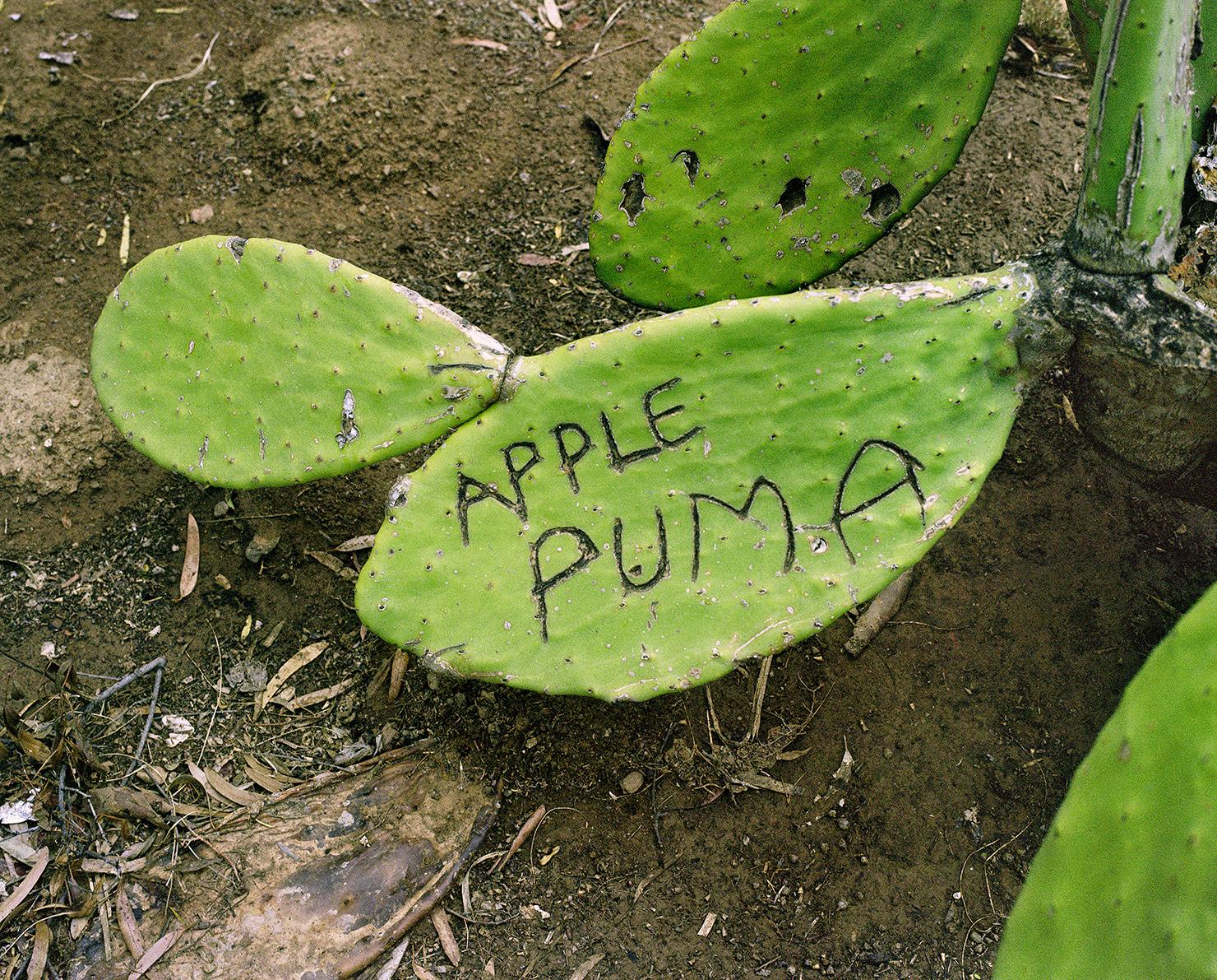 …KobieNel_ApplePuma.jpg
