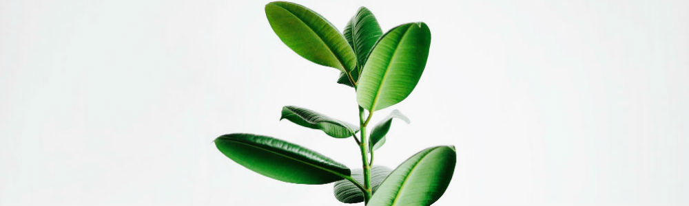 nordic-hair-concept-plante.jpg