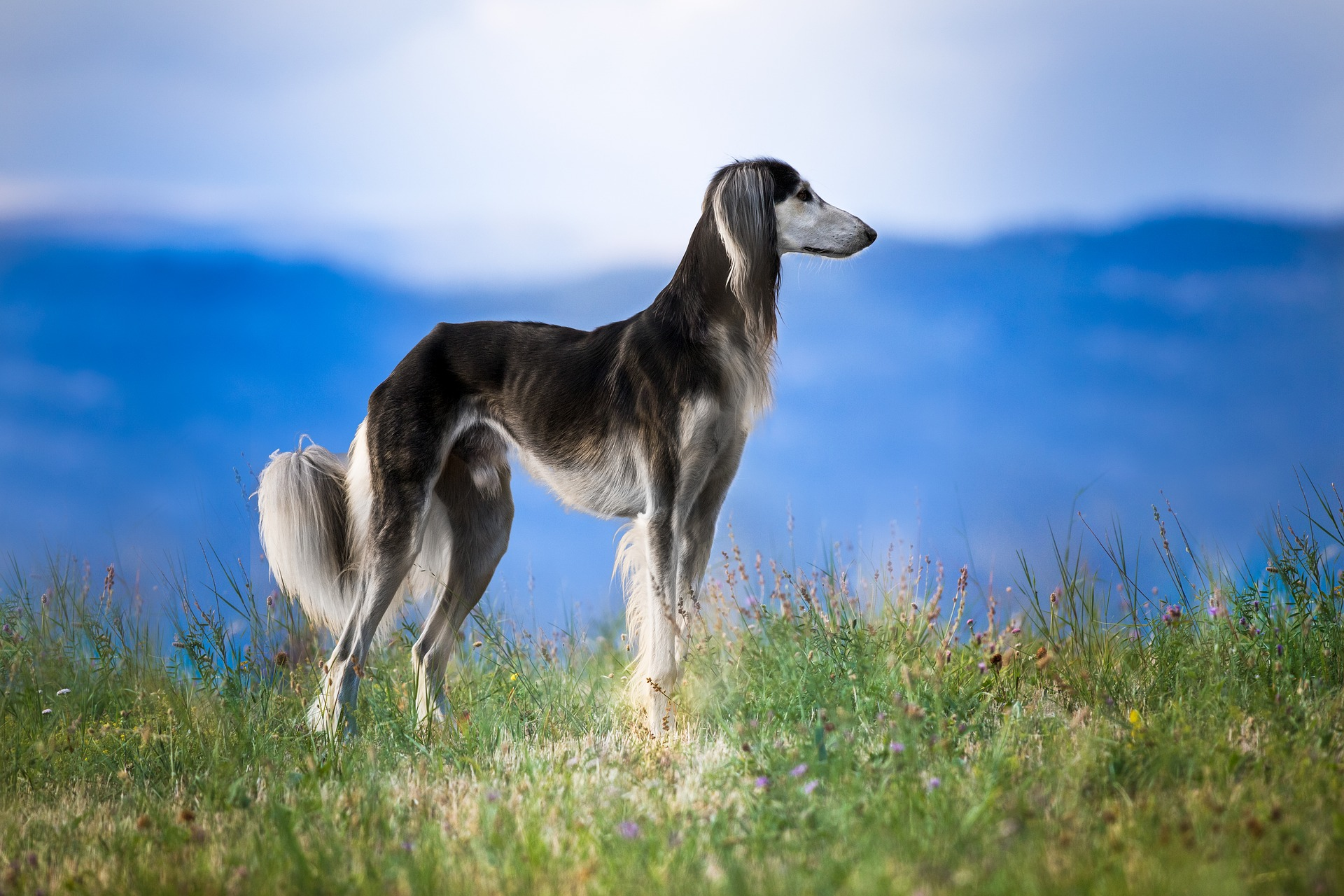 dog-3011990_1920.jpg