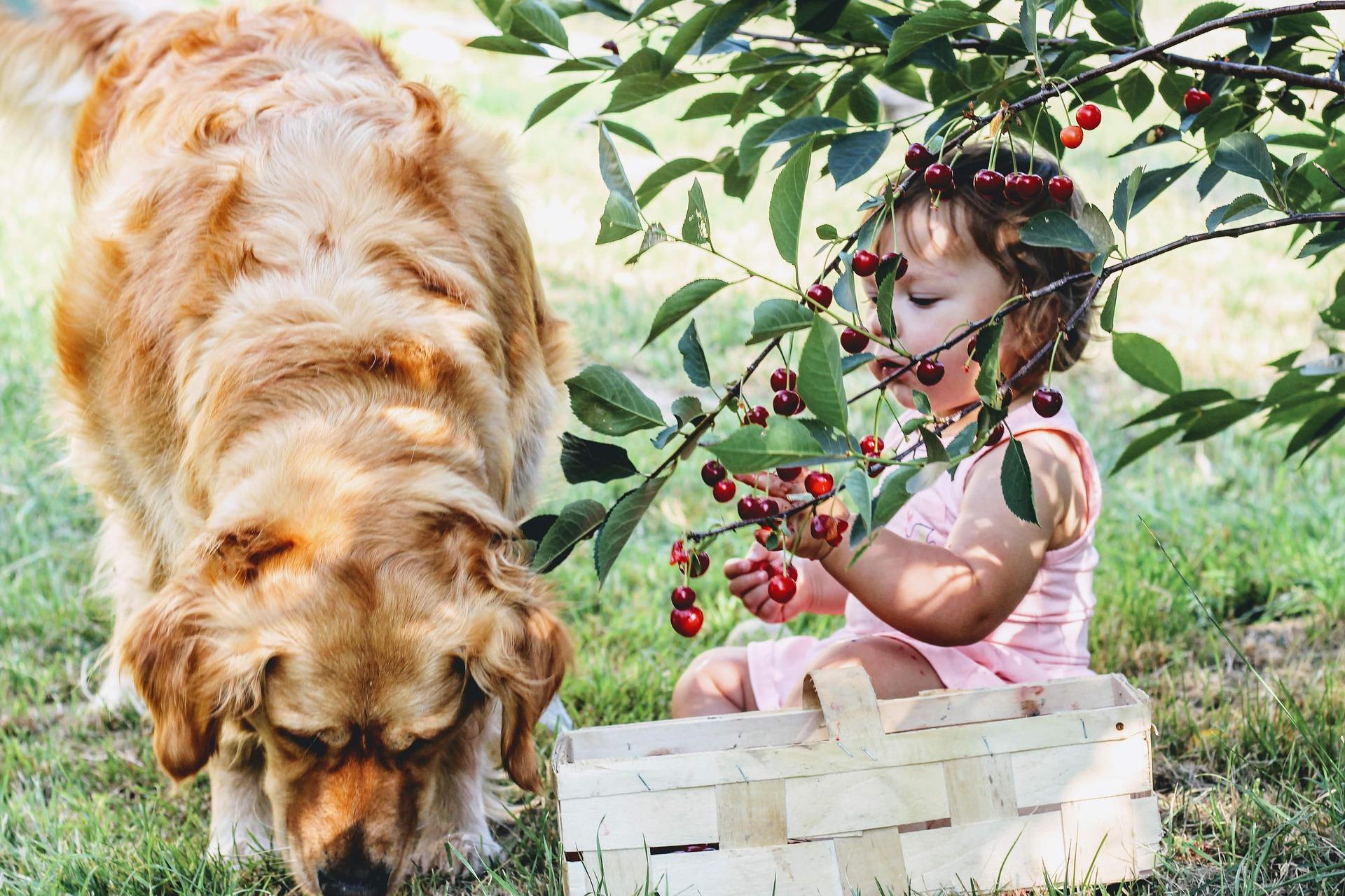 cherries-3497780_1920.jpg