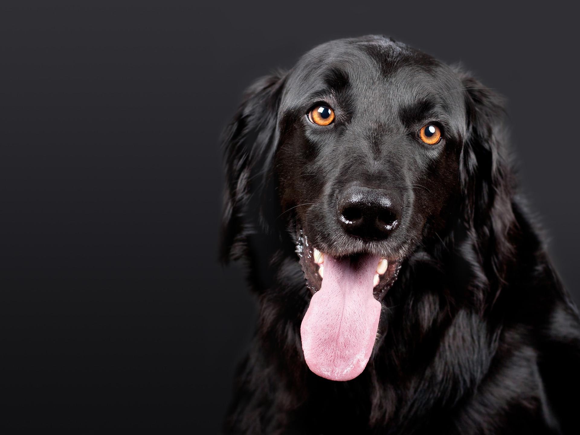 dog-1194087_1920.jpg