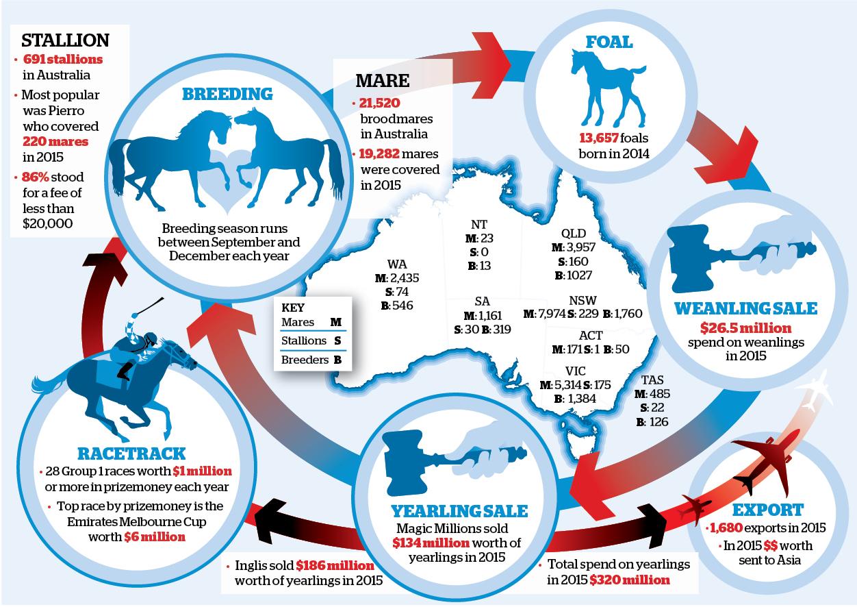 HORSEgraphic.jpg