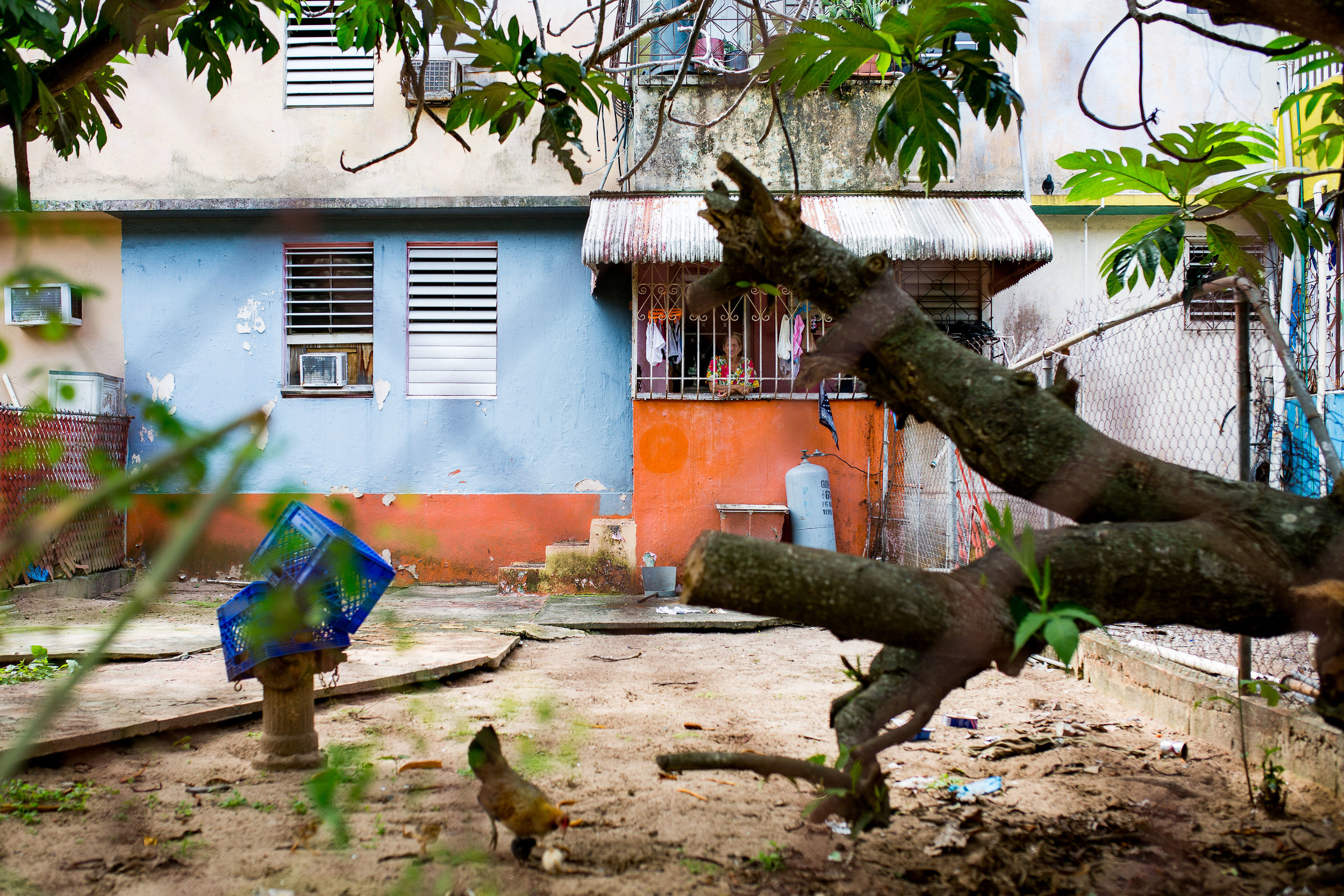 A backyard in Cantera, San Juan, with a tree that was knocked down during Hurricane Irma, which hit parts of Puerto Rico just two weeks before Hurricane Maria devastated the whole island. Photo: Katie Jett Walls
