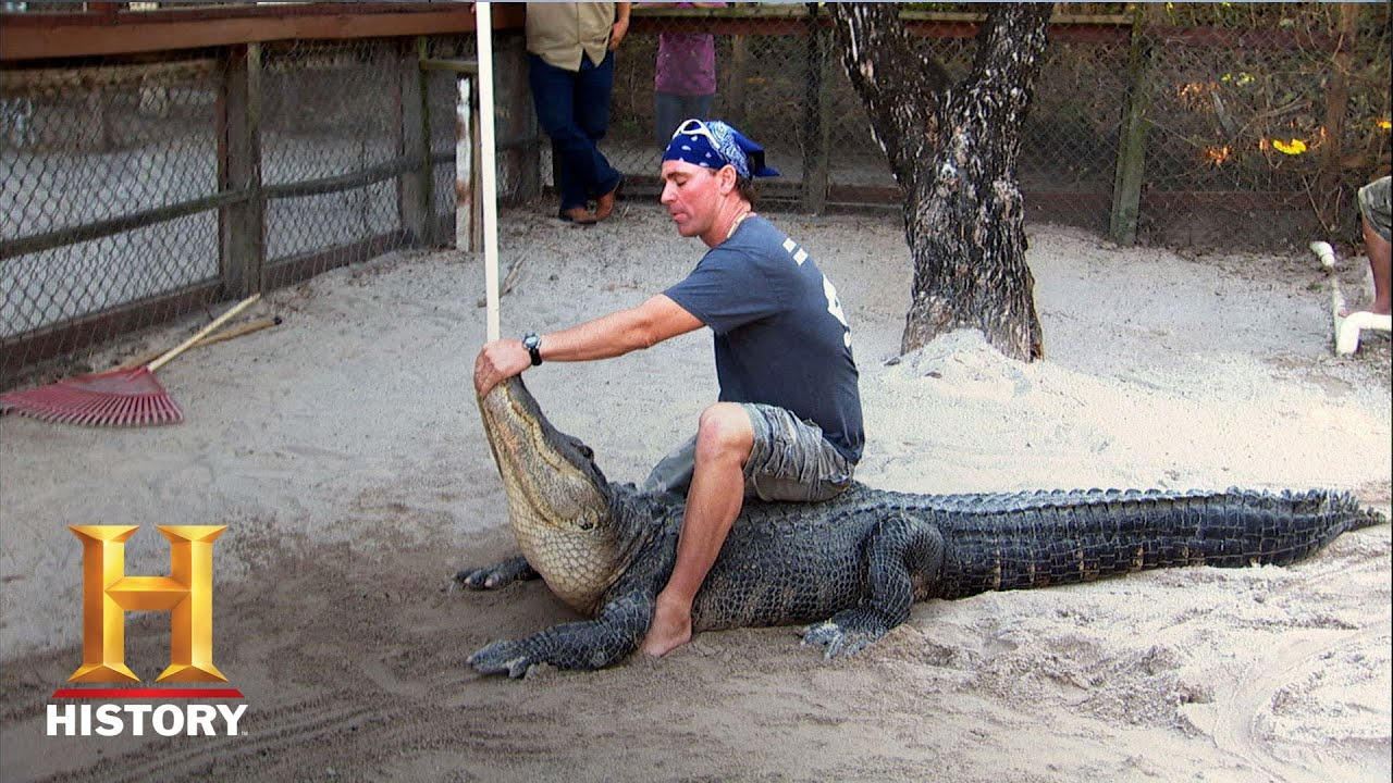 The alligator wrangler creates extension to remove frontal/transverse plane movement options. Alligators walk in the frontal plane, and attack in the transverse plane (death roll), by getting the alligator into extension methods of attack are eliminated.
