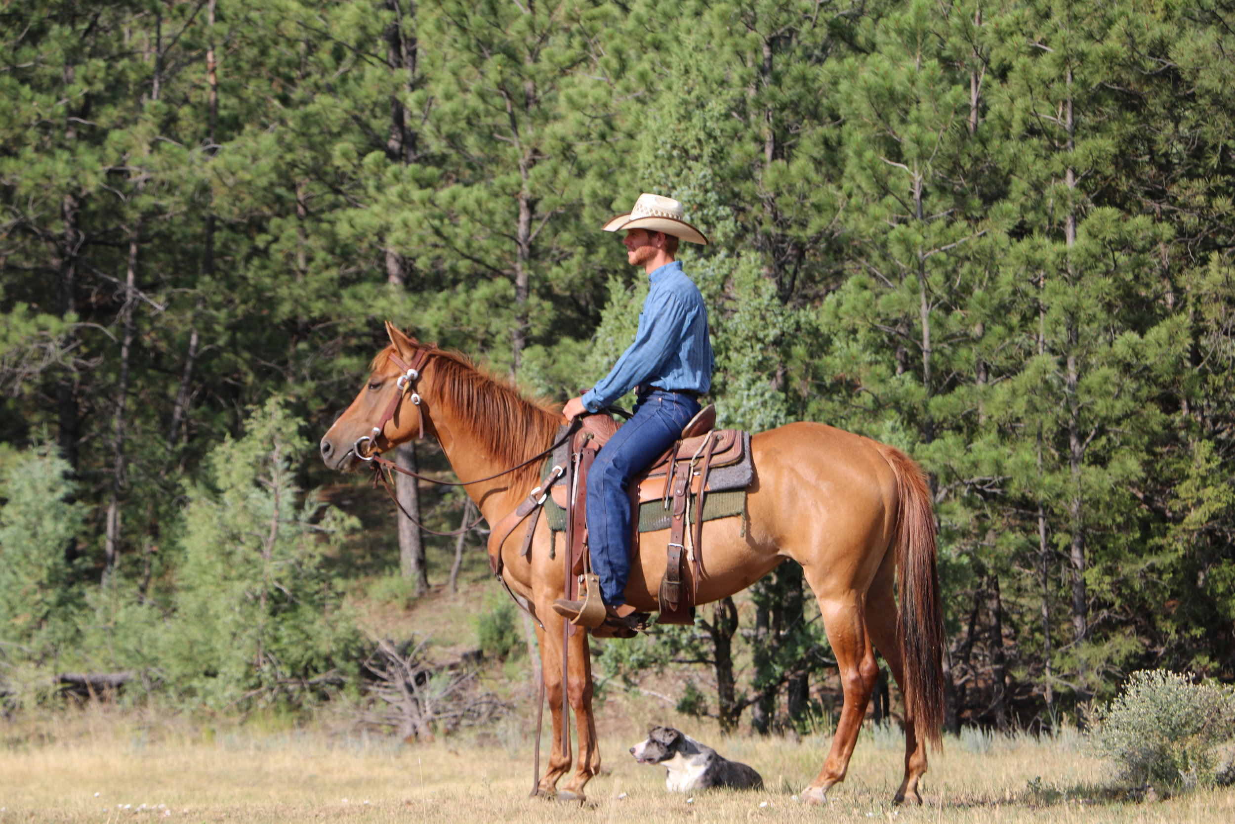 Cee Heart Rev Fritz - 2013 Red Dun Mare