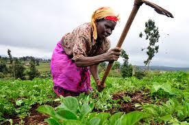 widow farming.jpeg