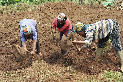 widows farming.jpg