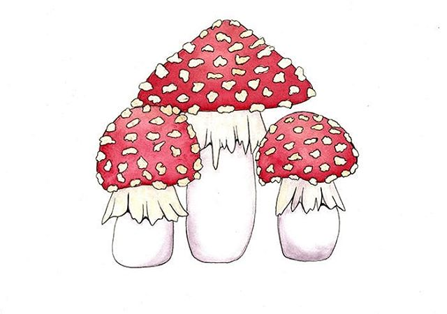Day 4: Fly Agaric. Watercolor and ink. Pretty happy with these! #mayshroom #samguayart #samguayartchallenge #watercolor #watercolorpainting #art #mushroom #mushroomart #mycology #natureart #redcap #flyagaric