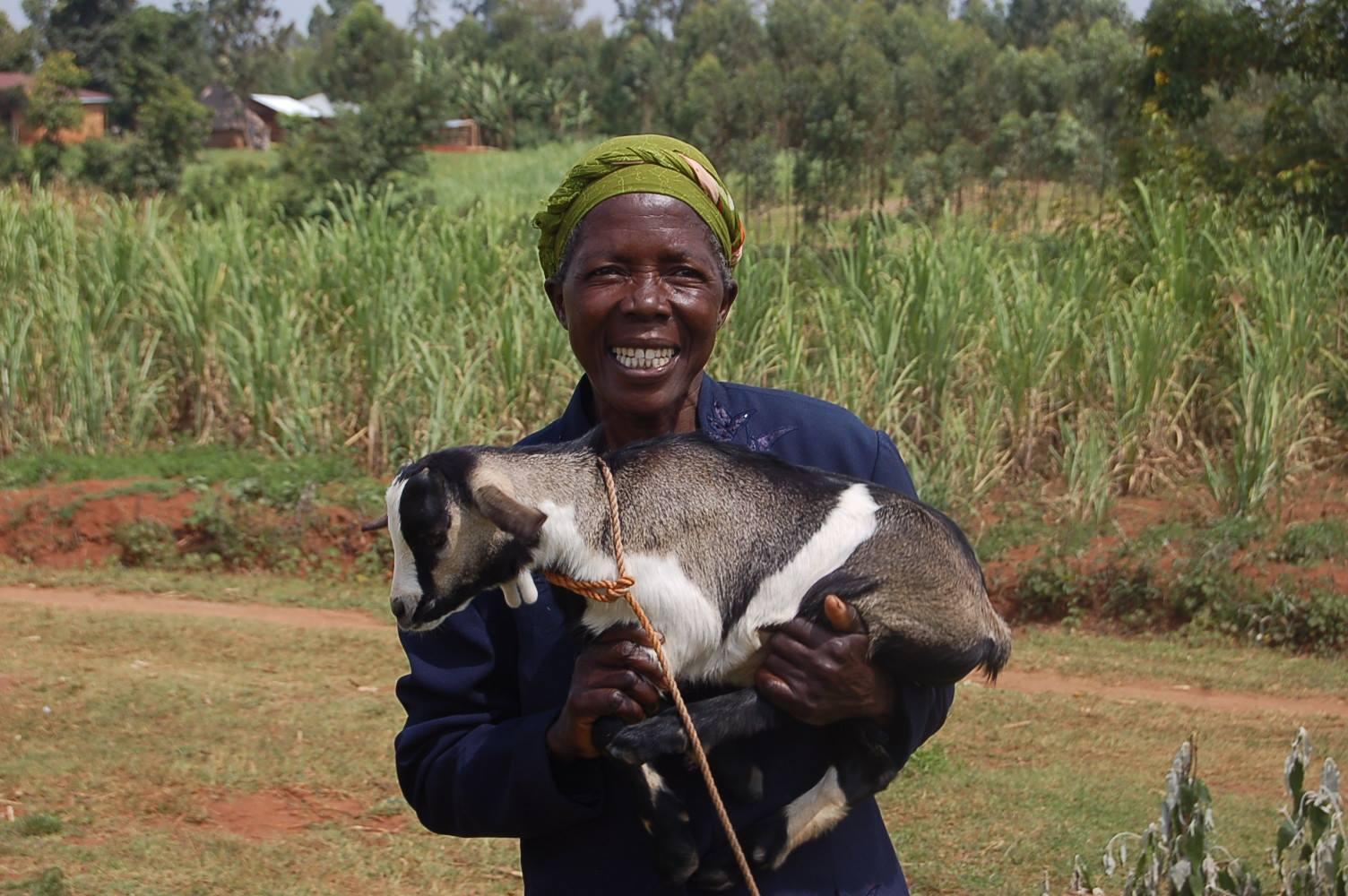 widow_goat.jpg