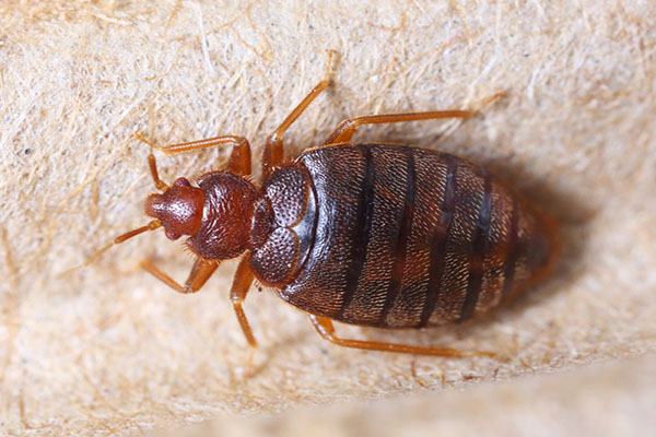 Signs-Your-Room-Has-Bed-Bugs-Main.jpg