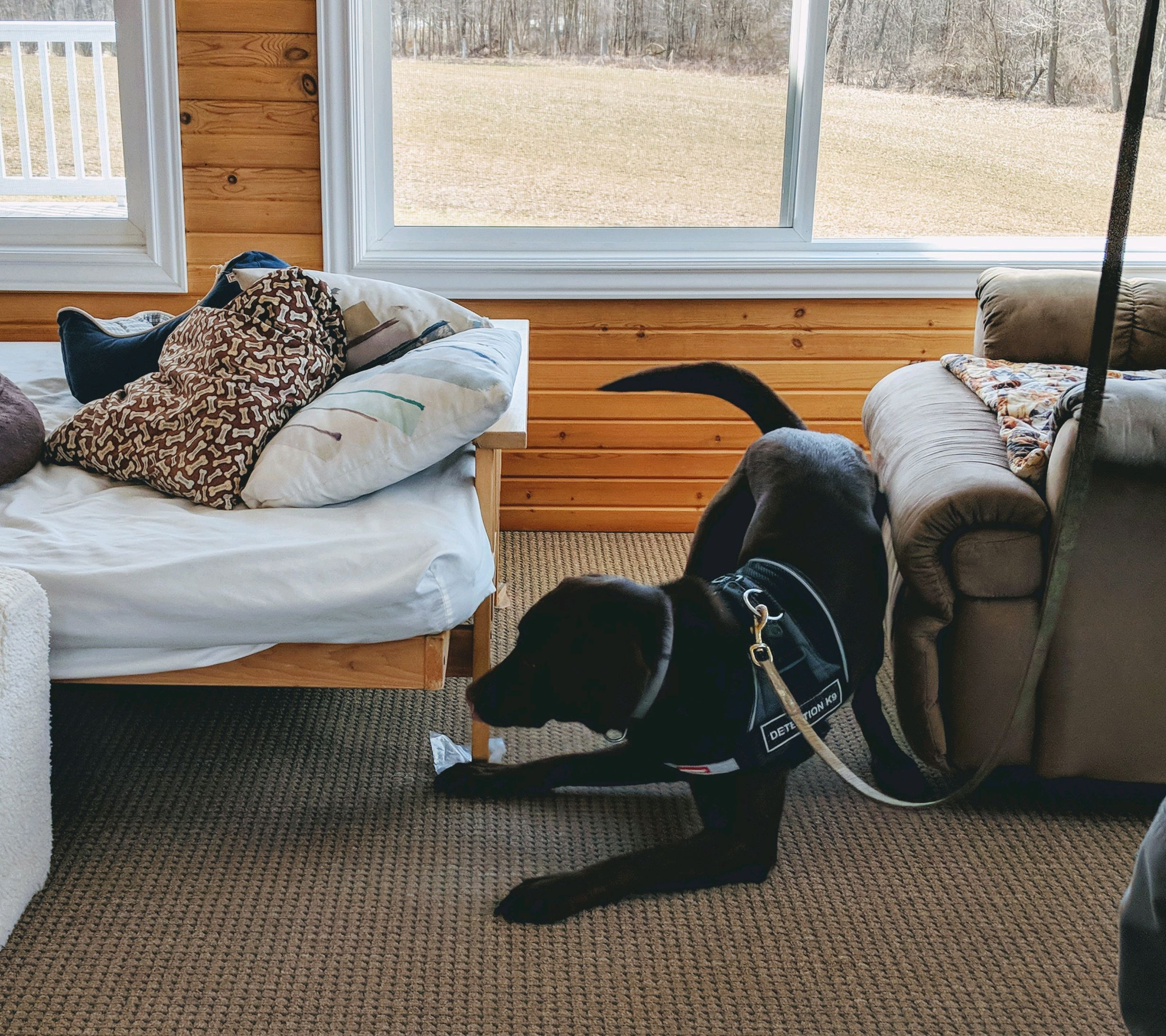 About Us — K9 Bed Bug Hunter