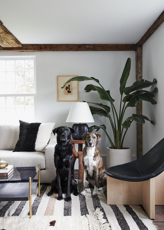 Bruey_Cottage_Den_Dogs_006.jpg