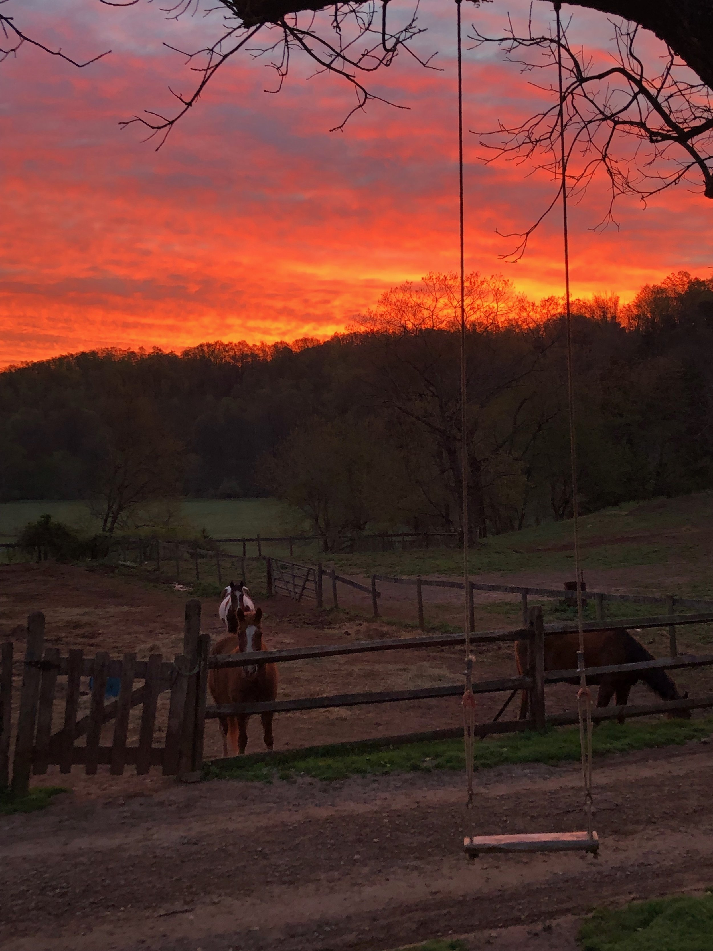 Sunset and back into the pasture for the night