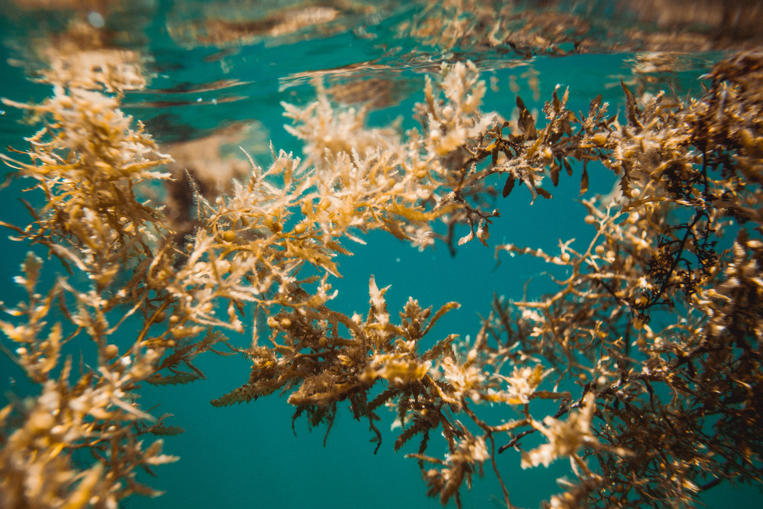 Seaweed Overgrowth In Mexico Inspires Business
