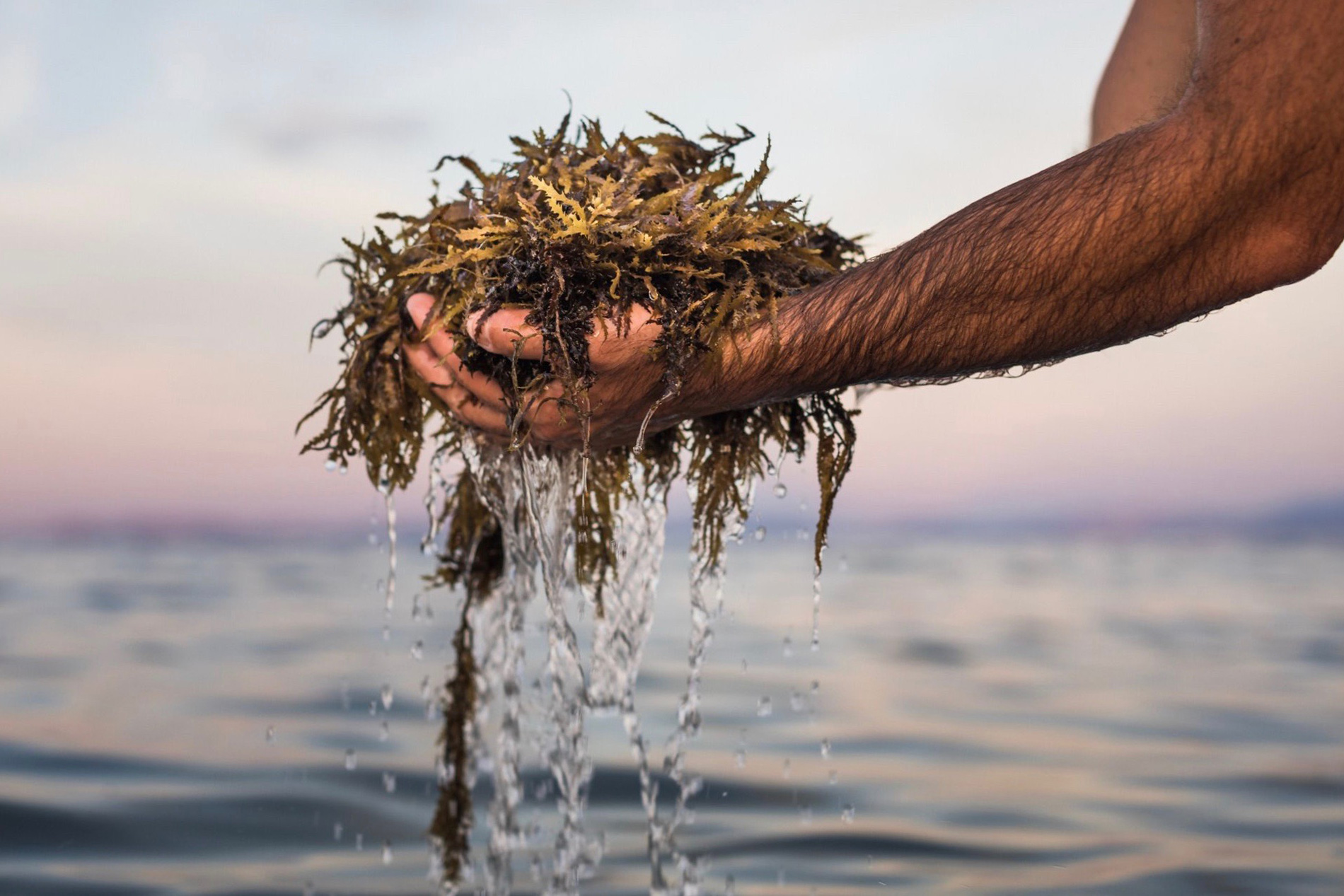 Seaweed Overgrowth In Mexico Inspires Business  — EP 5 of Contrapreneur The Podcast