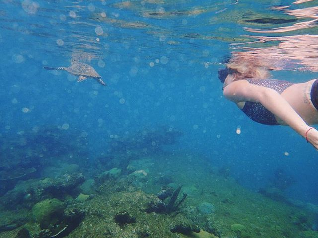 Swimming with sea turtles 🐢 It's quite common to have a sea turtle cruise by and say hi when you're out in the water here. Surfing, snorkeling, paddle boarding — we seem them all the time! One of the many magical things about Rincón 💙🇵🇷 Come experience all of the healing beauty of this island. Spaces still available for our Buena Vida Wellness & Yoga Retreat Rincón this May 22-26 - enjoy 5days/4nights of luxury, beachfront living, daily yoga + meditation, insightful workshops, fresh, local food, and quality time in nature. Tap the link in our bio for more info or shoot us a DM with any questions 🙏💛✨ . . .  #buenavida #yogaretreat #wellnessretreat #rinconpuertorico #thisisthegoodlife #estaeslabuenavida #swimwithseaturtles #dailyyoga #meditationpractice #freshlocalfood #timewithnature #natureheals #caribbeanyogaretreat #puertoricoyogaretreat #investinyourwellness #centrolapazrincon #livingyoga #prlovesyoga