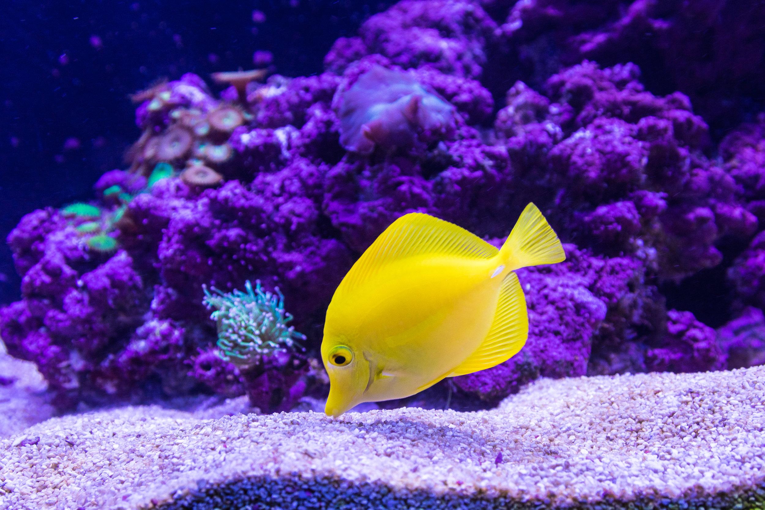 Aquarium Service -