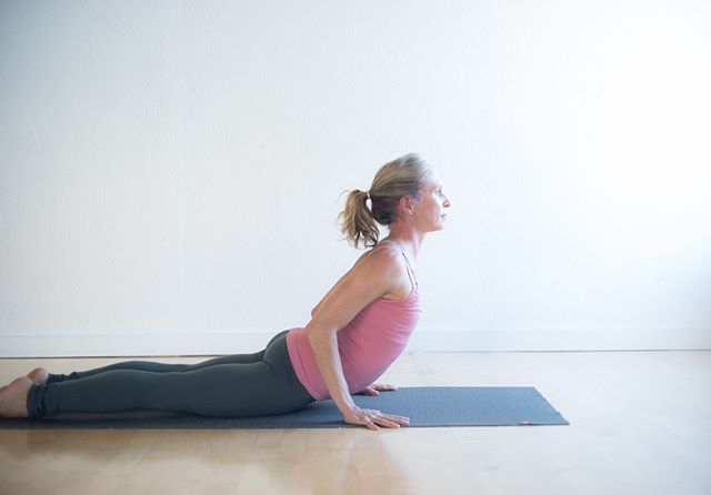 Cobra Pose or bhujangasana . Cobra pose is often used within a sun salutation or vinyasa as a transitional pose in a collection of asanas, and is considered a moderate back bend that can help prepare the spine for more advanced back bends. The pose can be practiced as a low cobra (nearest to the mat or floor) or a high cobra (with the upper body moving higher, almost into a full upward-facing dog pose), and is easily adjusted based on individual needs.  Cobra pose stretches the chest and lung areas; strengthens the spine, shoulders and abdomen; firms the buttocks; and is thought to aid in digestion and intestinal relief. This pose is also an excellent counter stretch to relieve muscles that are hunched or curled over from working at a desk or using mobile devices for many hours during the day. . . . info from #yogapedia  #yogaforlife #yogapose #yogaforeveryone #yogainspiration #yogaasana #yogajourney #yogaanatomy #sadhana #healthybody #yogastudy #berkeleyyoga #practiceandalliscoming #practicemakespractice #yogalove #asana #livingyoga #yogalifestyle #practiceyoga #practicemakesprogress #selflove #yogaprogress #yogastudent #selflovejourney #mindfulliving #mindfulness