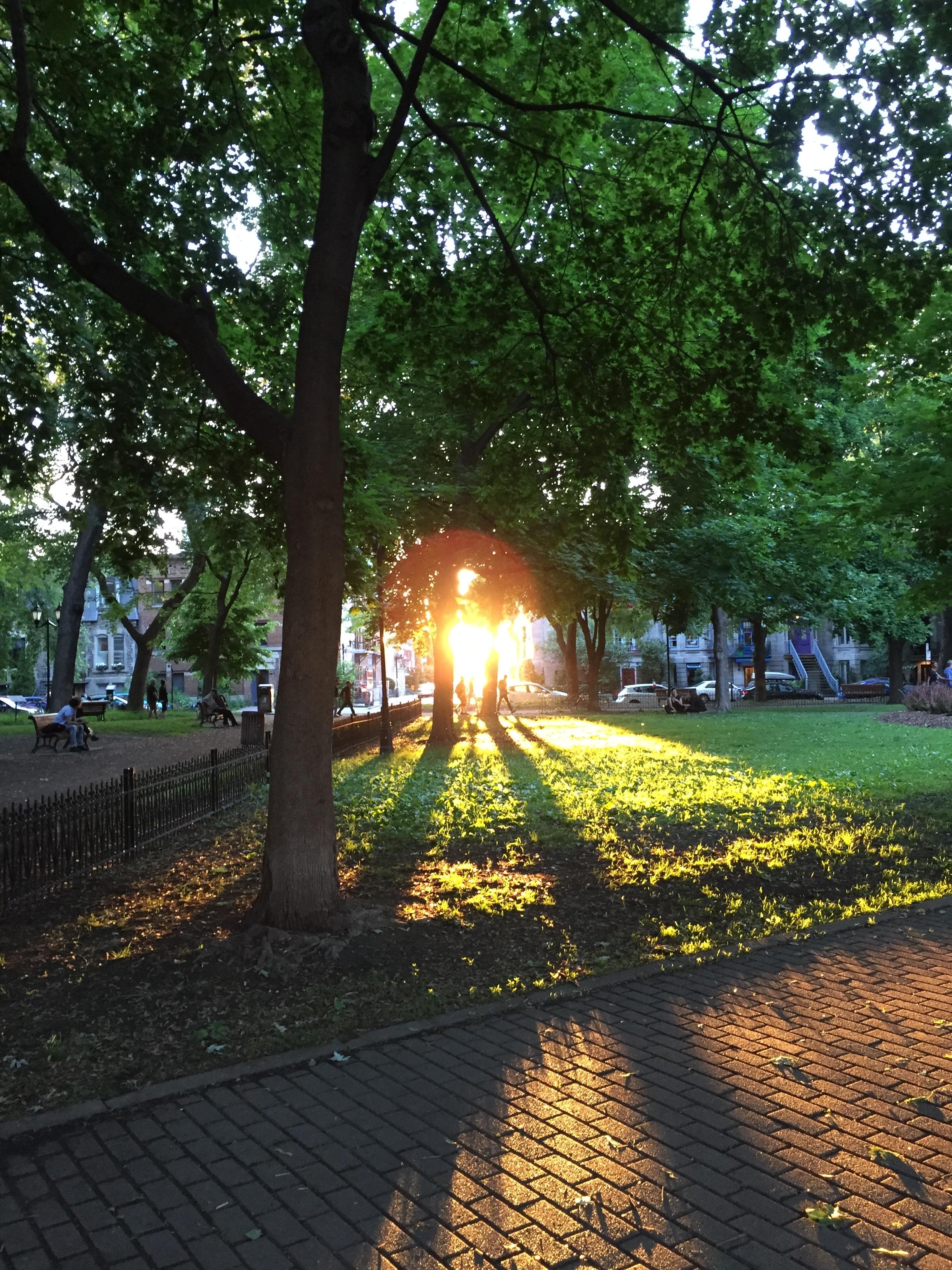 Lever de soleil. Les rayons se faufilent parmi les arbres du parc. Des passants marchent. Silhouettes à contre-jour. Montréal, Square Saint-Louis.