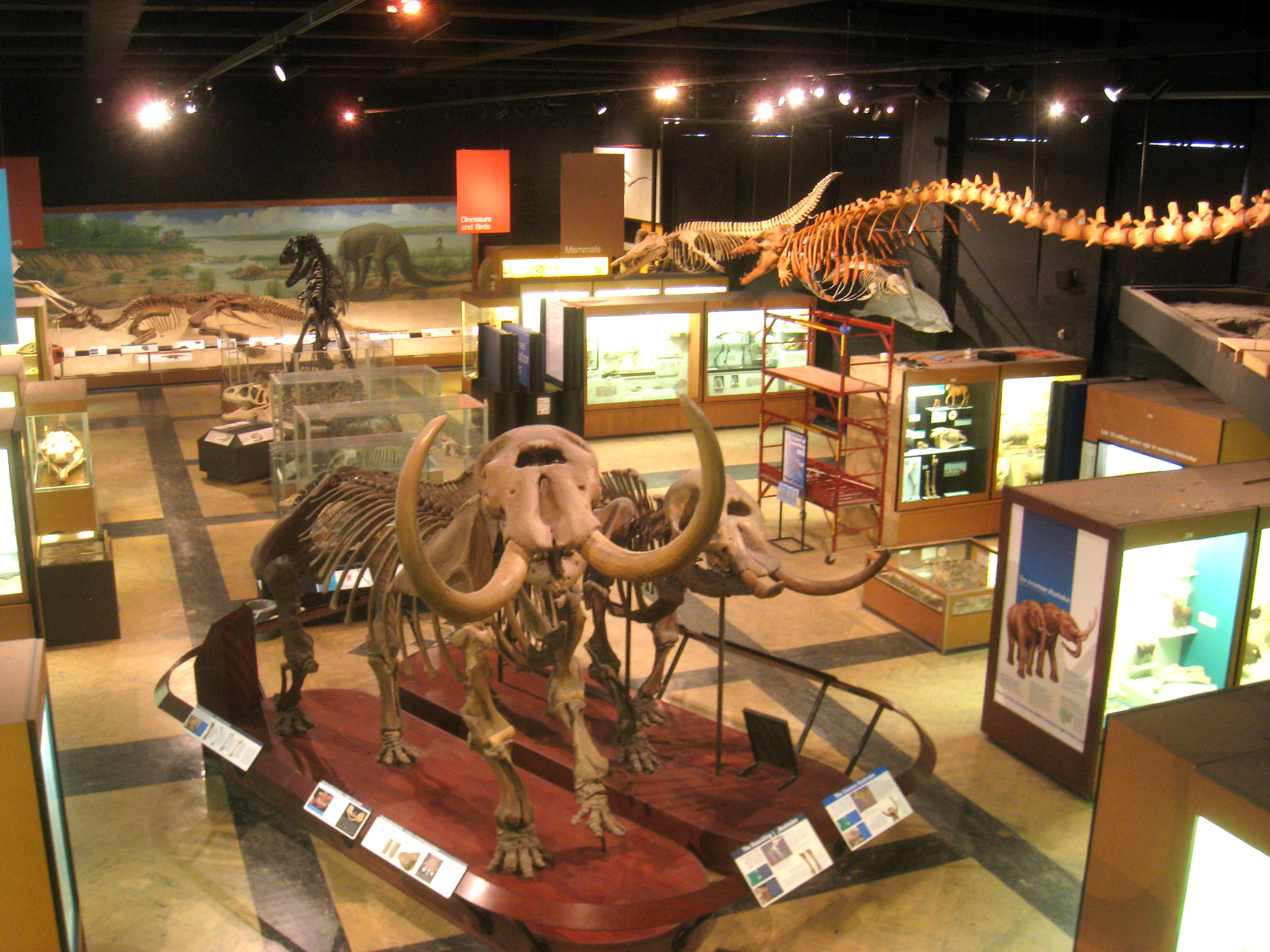 Exhibit_Museum_of_Natural_History,_Ann_Arbor_-_IMG_9055.jpg