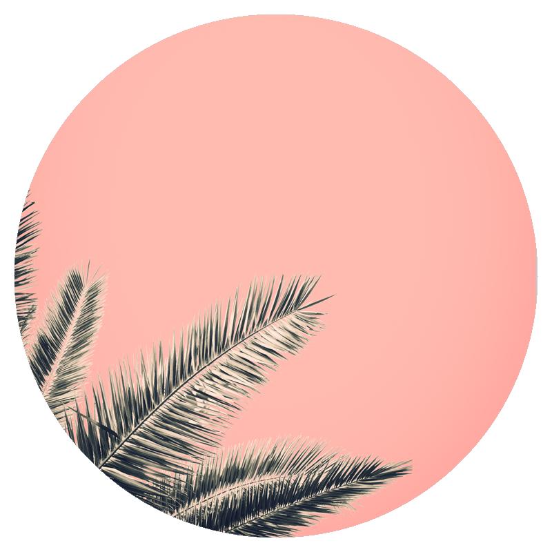 pricing circles palm.png