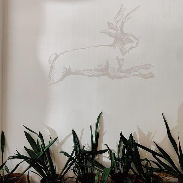The elusive Antlered Bunny ... #reflection #Auntbenny #berlinbrunch #breakfast