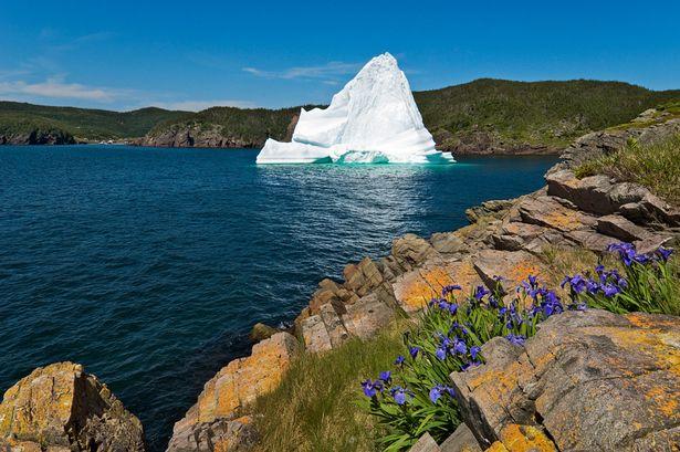 Newfoundland.jpg