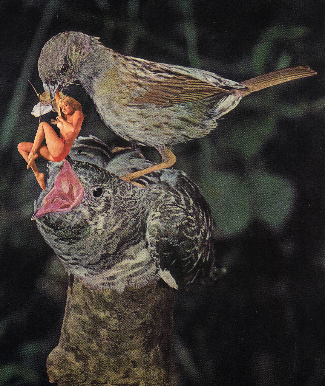 Mamma Bird Me