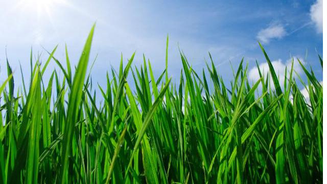 46690881-grass