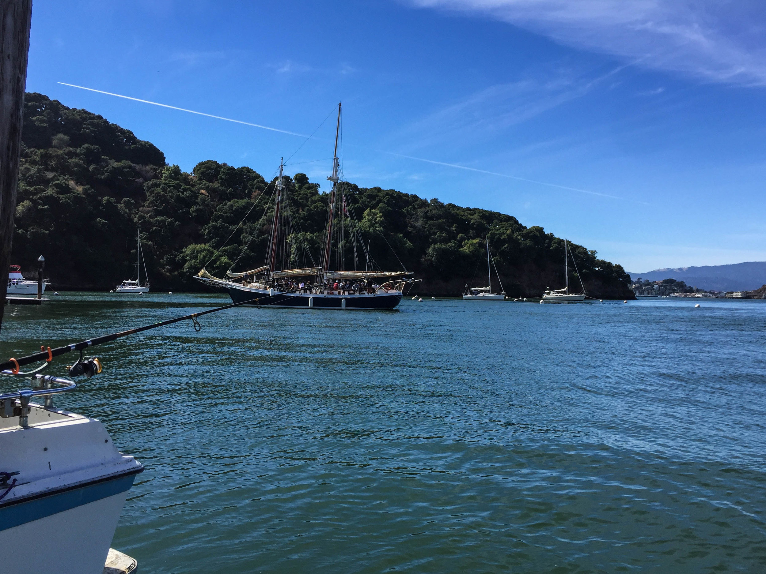 Sausalito Sailing