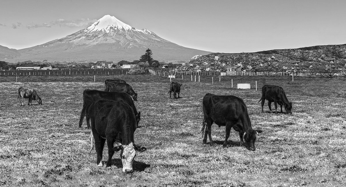 Free Range Beef, Taranaki, North Island - There are three things Taranaki is famous for: its awesome snow-capped mountain, epic surf, and lots of good green grass. It's the perfect place toraise some of our best high quality beef.