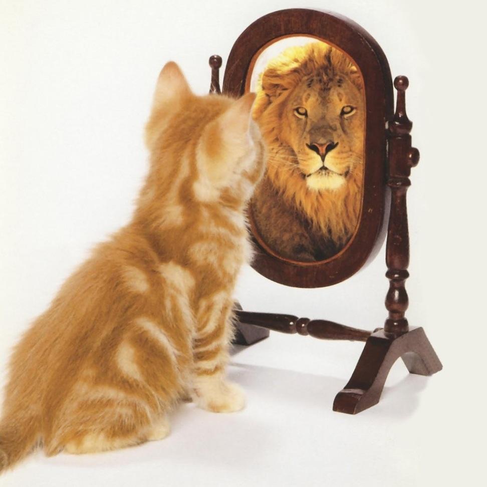 cat%2Blooking%2Bin%2Bmirror%2Bsees%2Blion.jpg