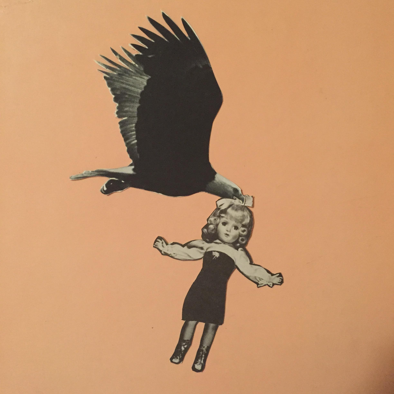 bird of [rey.jpg