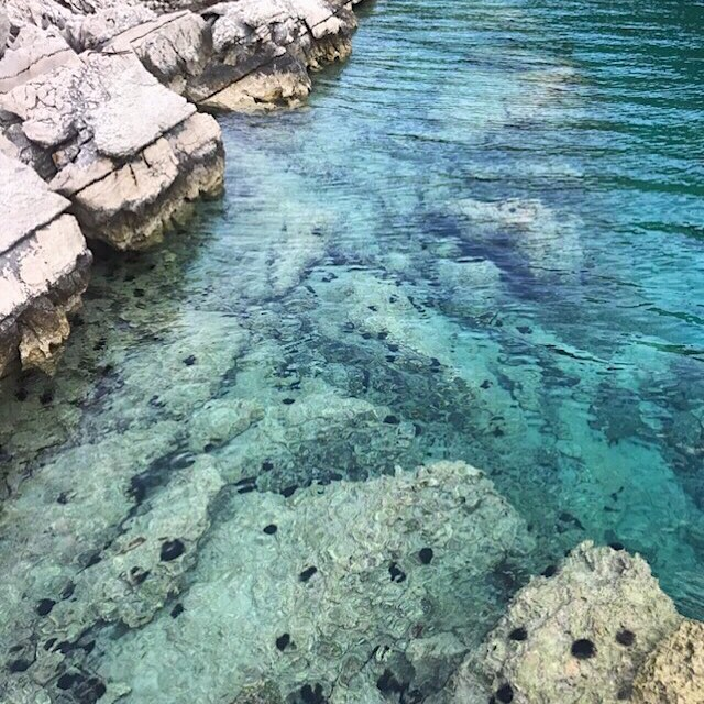 || Ocean Appreciation || ⠀⠀⠀⠀⠀⠀⠀⠀⠀ This piece of tranquility was taken by one of our own on her amazing travels visiting the island Mijet, Croatia. Such clear water, only a little bit jealous.