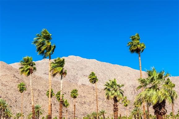 palm_springs_landscape.jpg