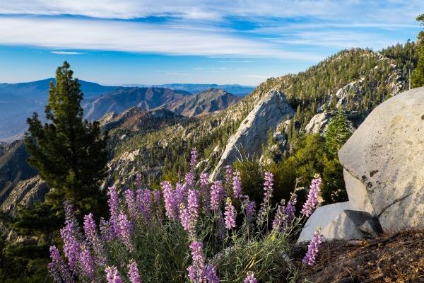Hiking-in-Palm-Springs.jpg