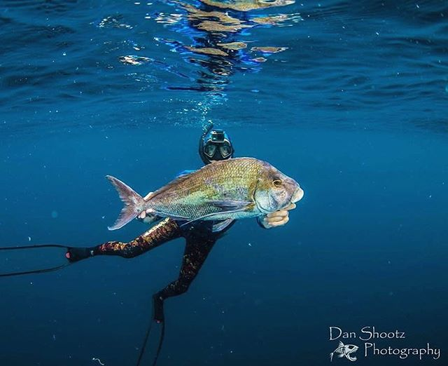 Spearo Sunday: Blue Morowong  aka Porae. Hands up whos shot one of these puppys thinkin its a trophy snapper 😂😂🤡🤡🐟🐟🐟🐟 . . . . #spearzone #Spearfishing #spearing #spearo #blue #fishing #diving #freediving #spearfishing_international #spearfishing_reviews #spearfishing_worldwide #spearfishingworld #spearfishinginternational #nzspearfishing #spearfishingnz