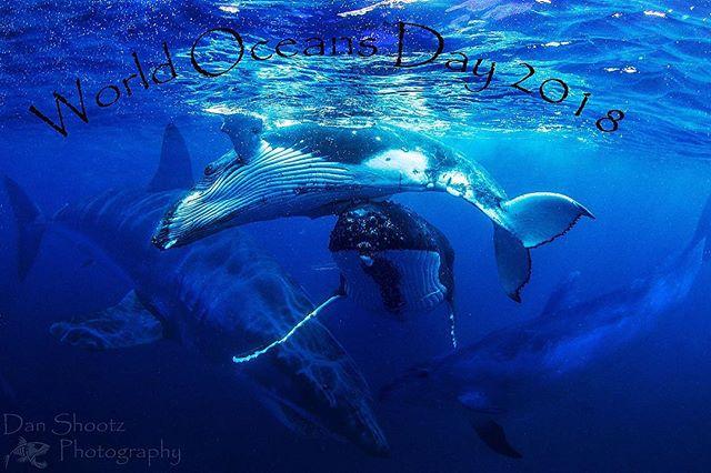 Happy World Oceans Day 🐳🐬🐟🐠🐋💙