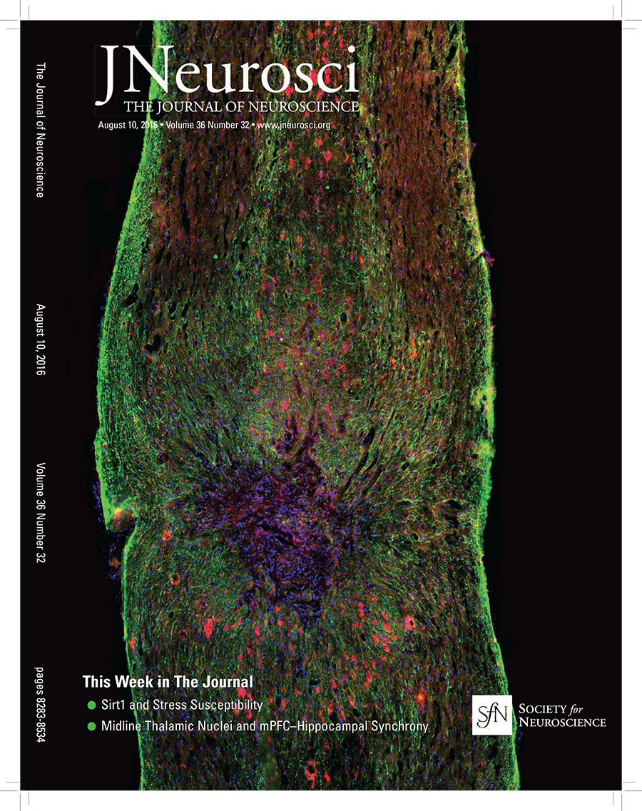 J. Neurosci.  cover image, August 10, 2016. Spinal cord injury site. Red, Iba1+ microglia/macrophages; green, GFAP+ astrocytes; blue, DAPI+ nuclei.