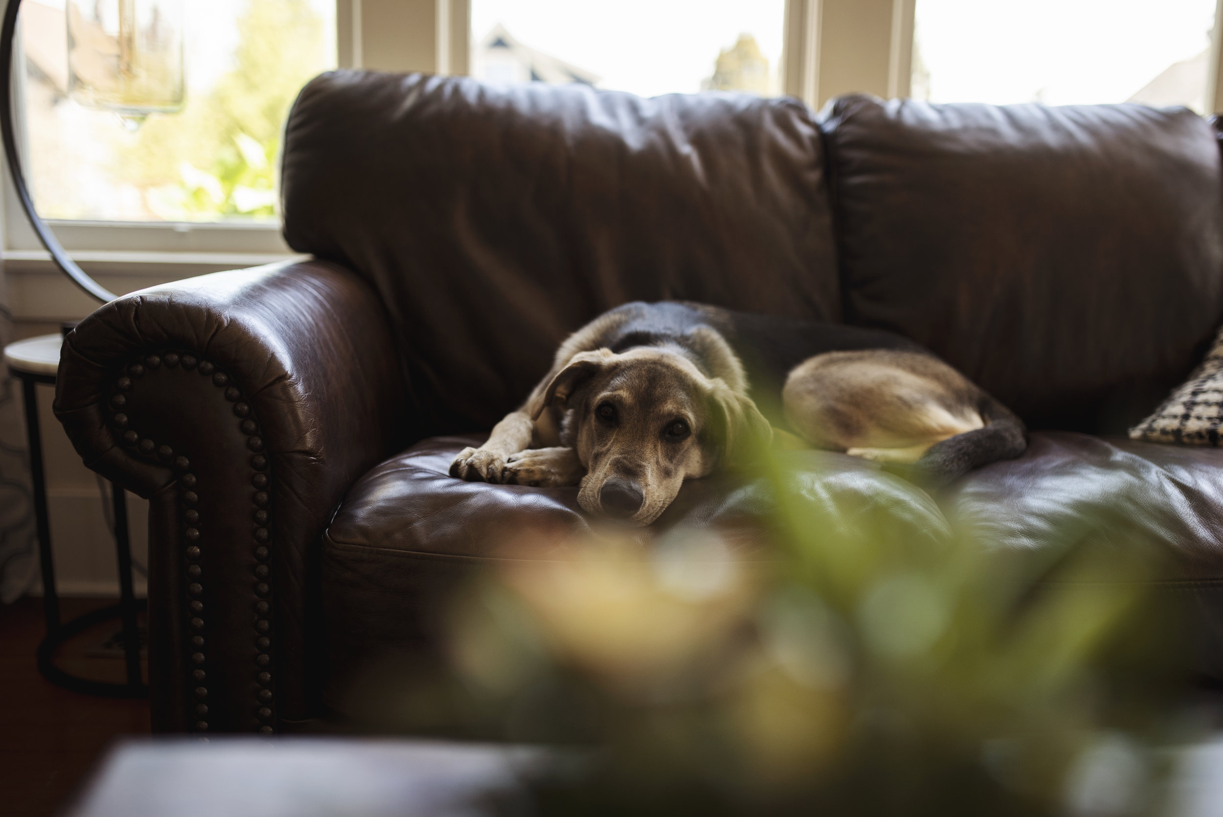 Lifestyle family photography dog lying on couch