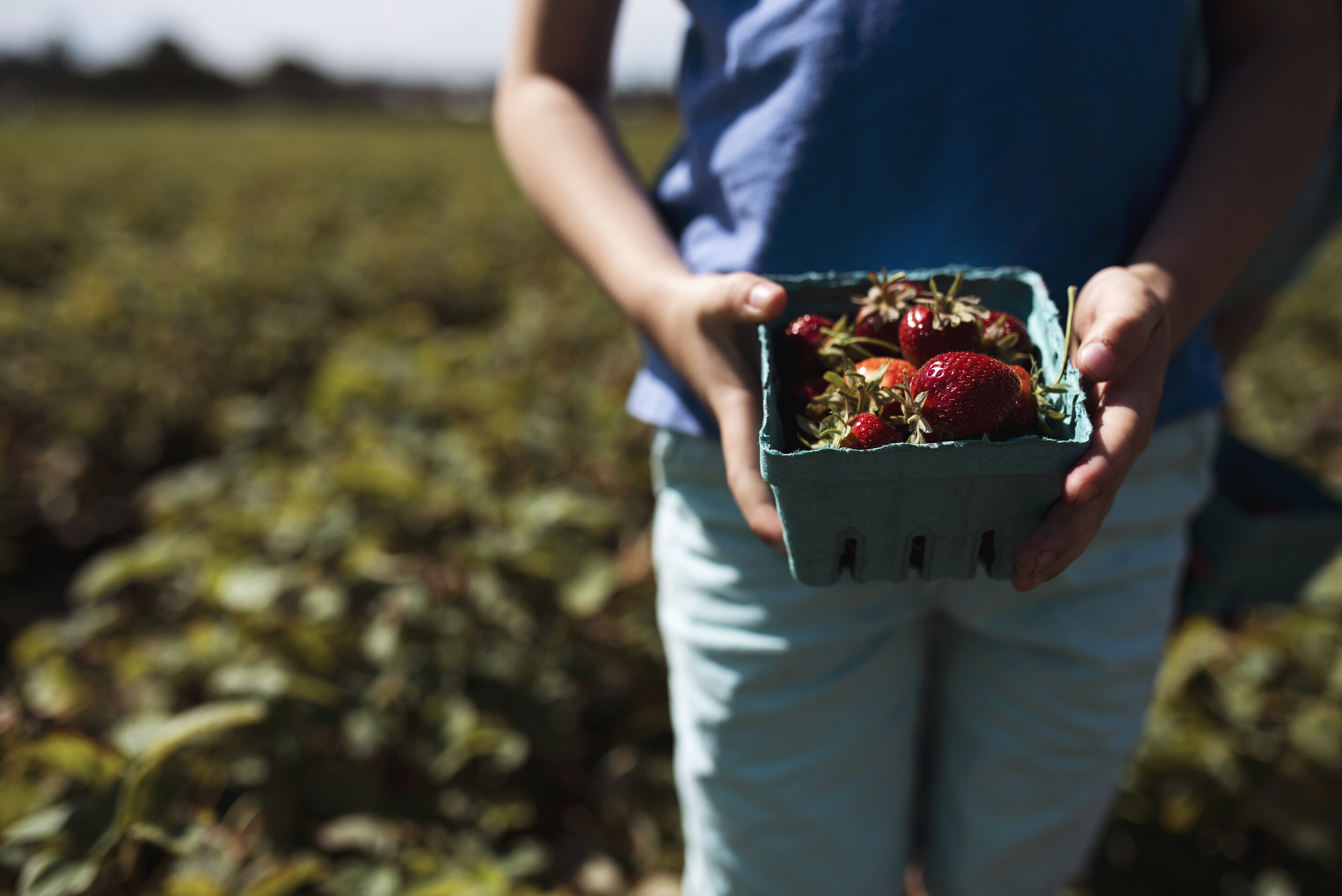Seattle lifestyle photographer boy holding strawberries