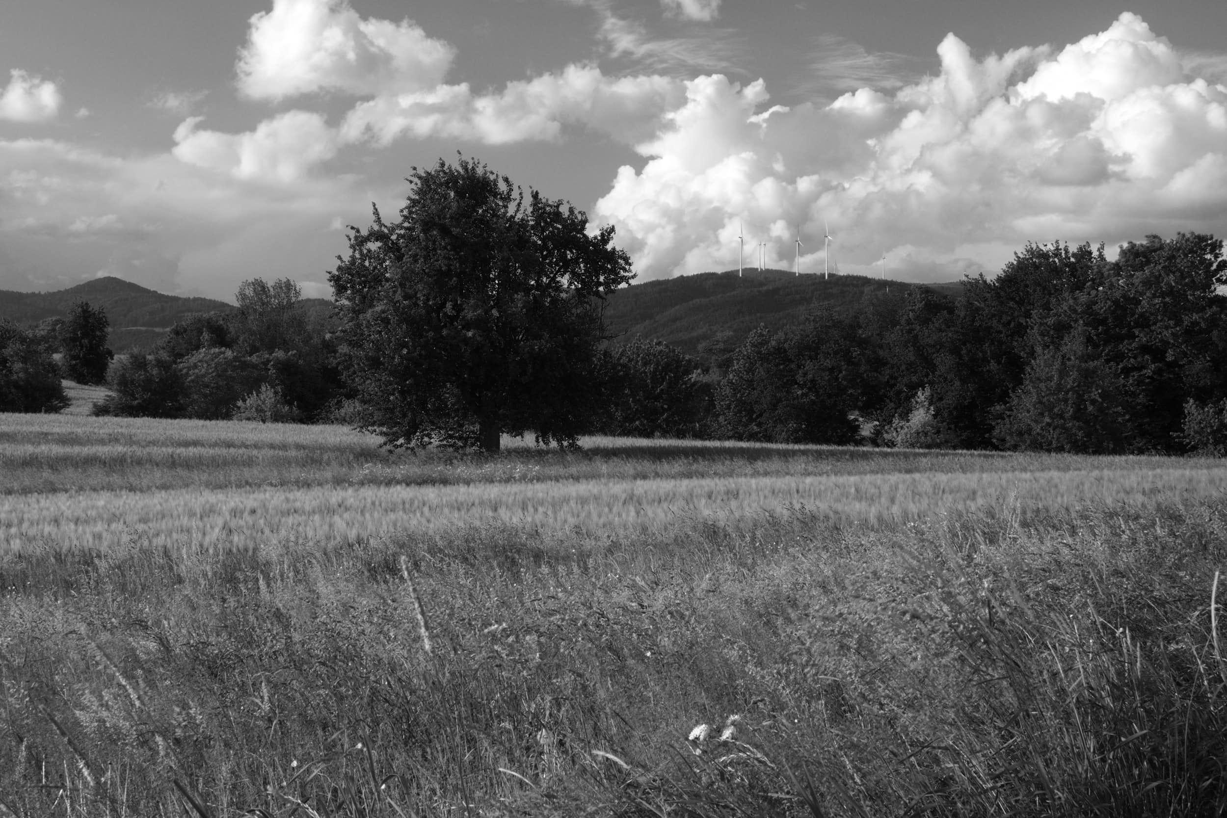 n90.photography-18-05-20-0051.jpg