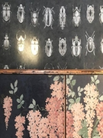woodchip and magnolia beetles.jpg