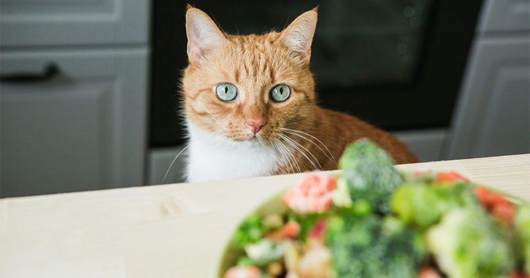 cat supplements.jpg