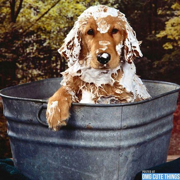 dog grooming.jpg