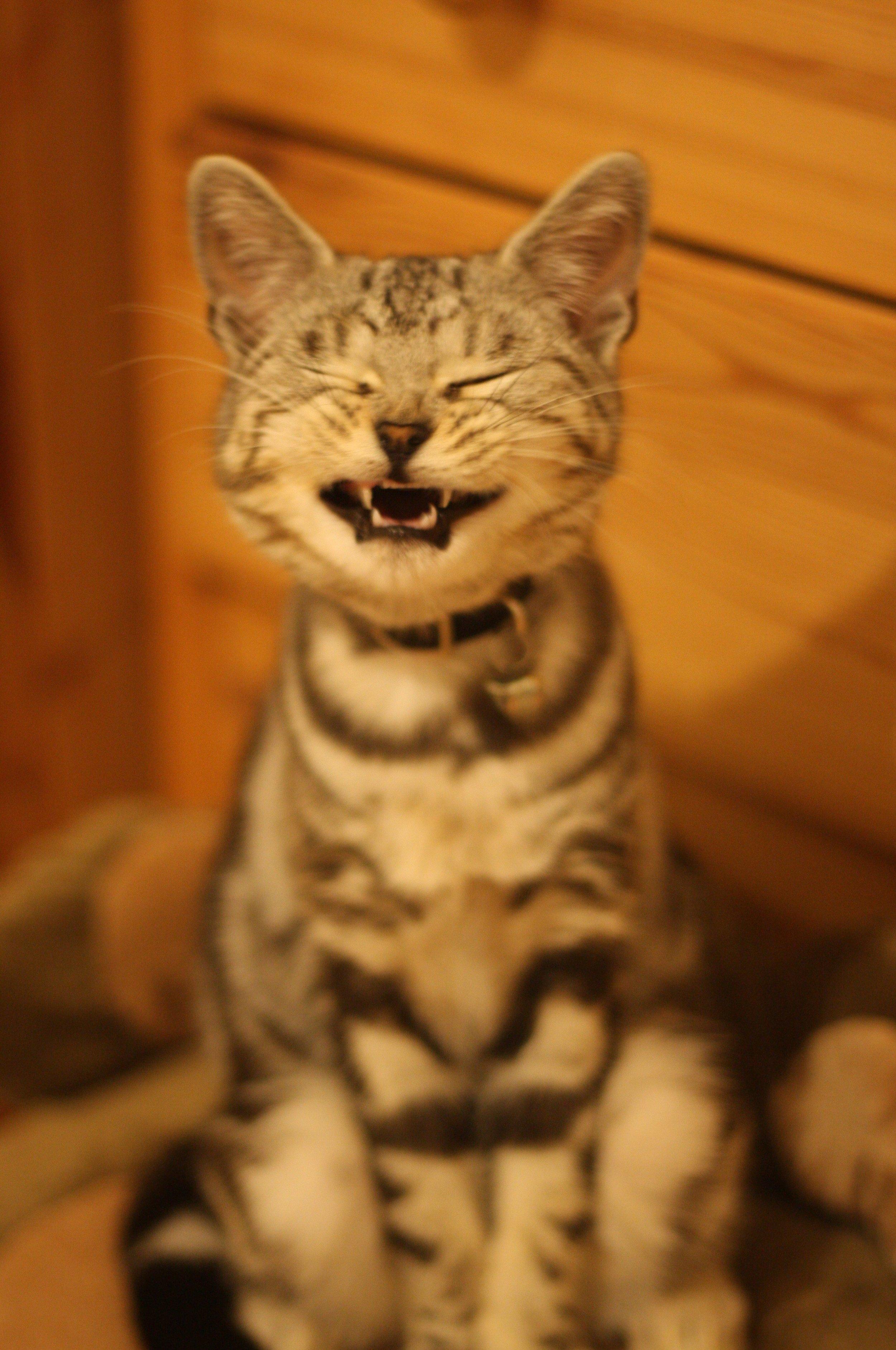 sneezing_cat.jpg