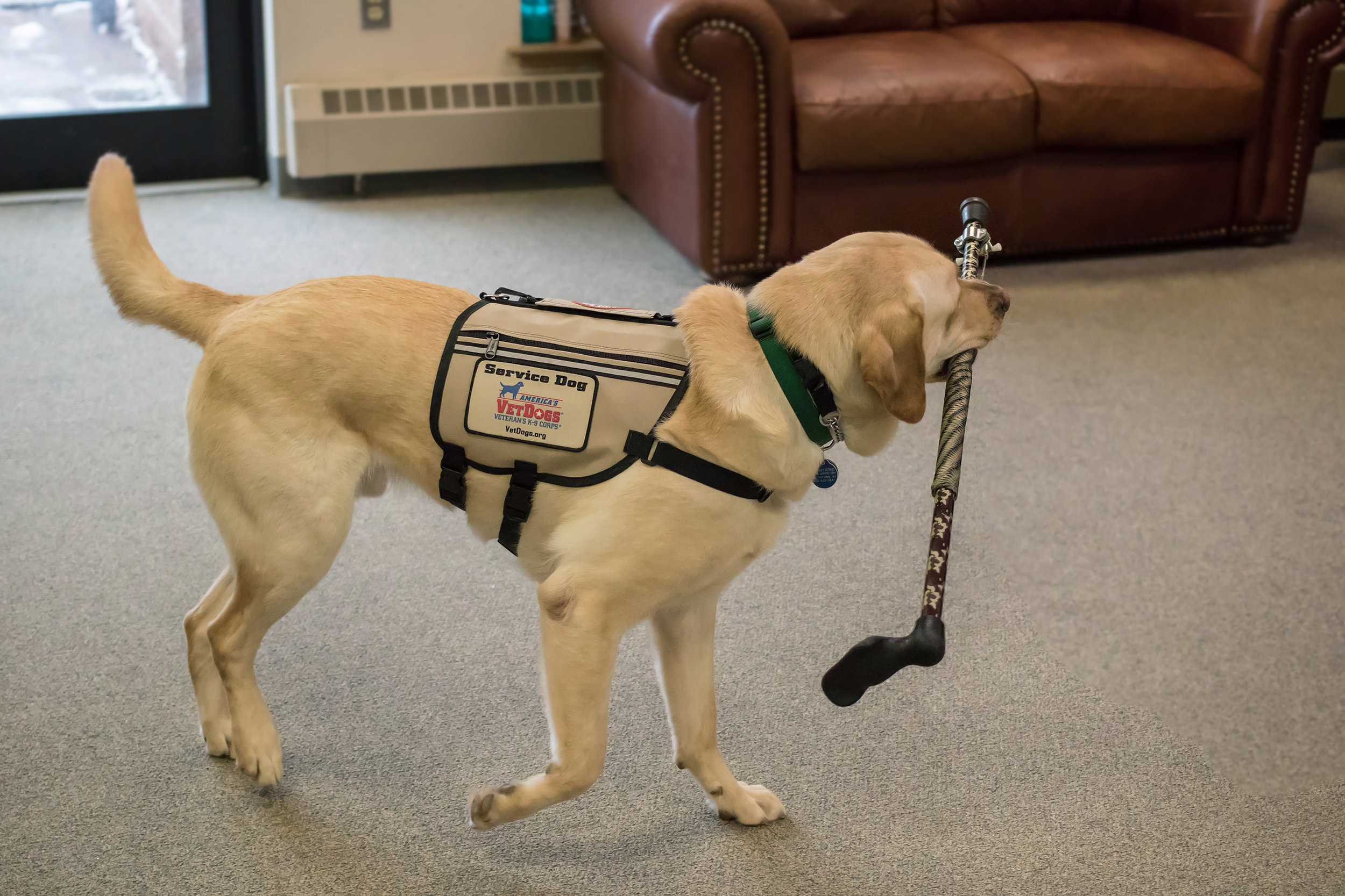 Wags to Wiskers Service Dogs